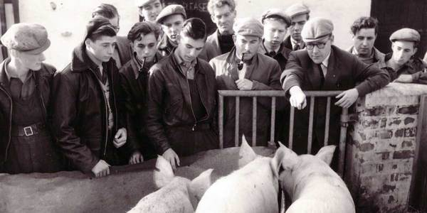 Archive shot of men at the pig market