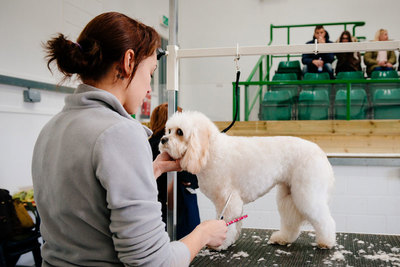 Our Dog Grooming in action