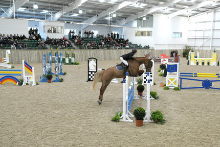Showjumping inside the Arena