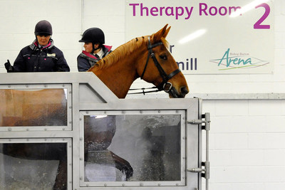 Horse in the Therapy Treadmill