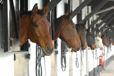 Horses in the stable block