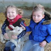 Spring arrives at Bishop Burton as thousands of visitors flock to Lambing Spectacular